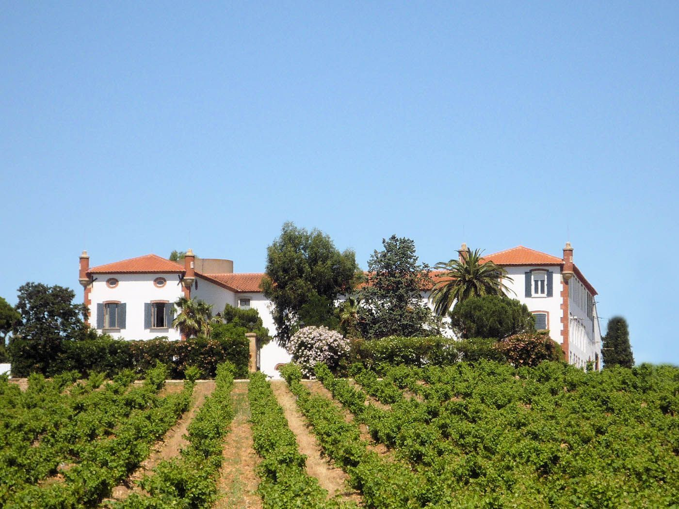 Viticultural property's view