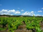 Located in the Languedoc, AOP Minervois designation vineyard