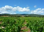 AOP Minervois designation wine estate of 18 ha of vines