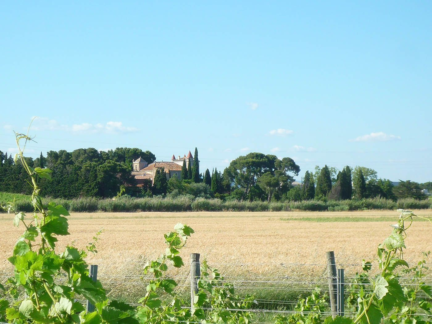 Castle's view from the vines