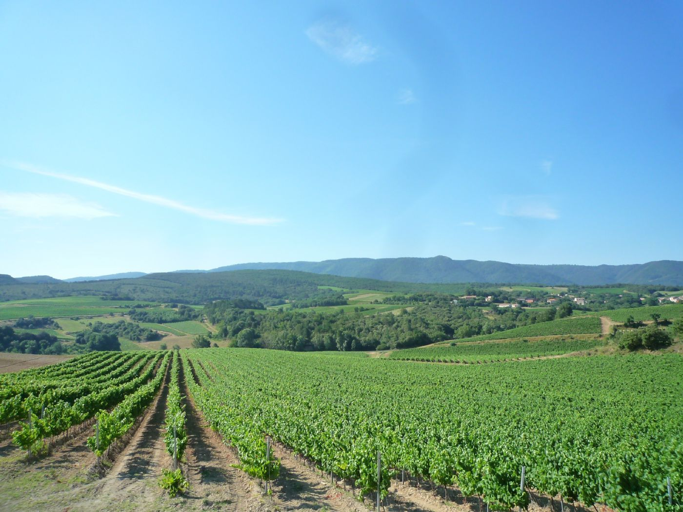 Purchase wine estate in Languedoc